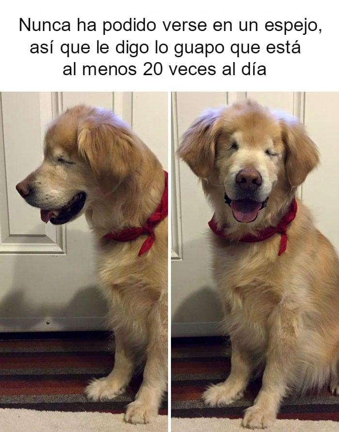 perrito feliz 4