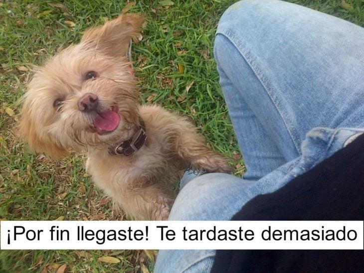 perrito feliz 7