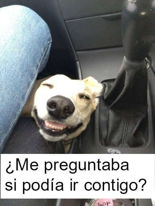 perrito feliz 9