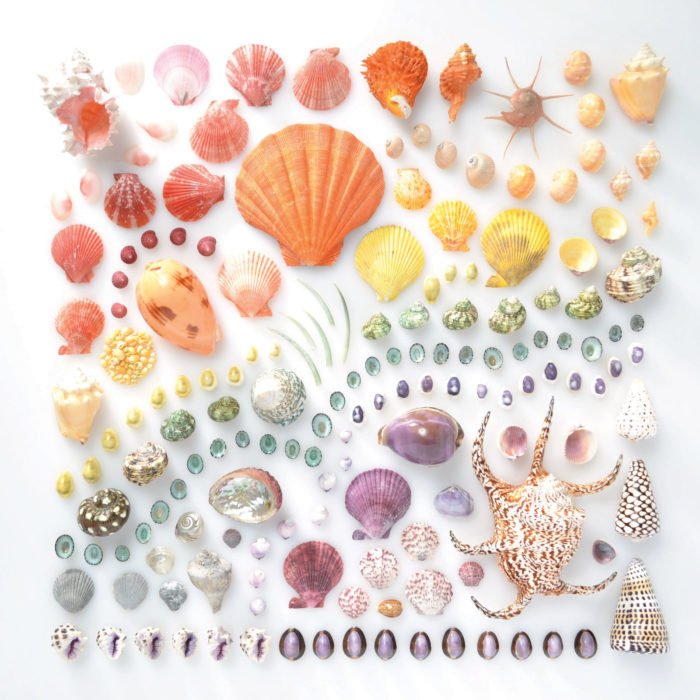 conchas ordenados por color
