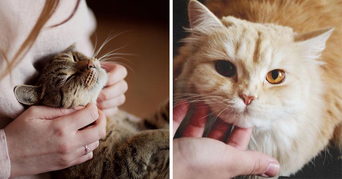 Veterinaria busca personas para trabajo de tiempo completo acariciando gatos