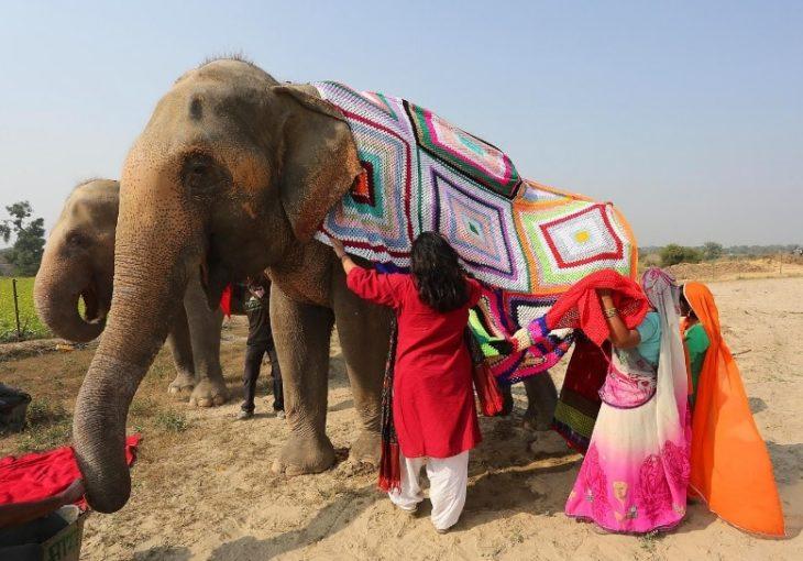 mujeres vistiendo elefantes con pijamas