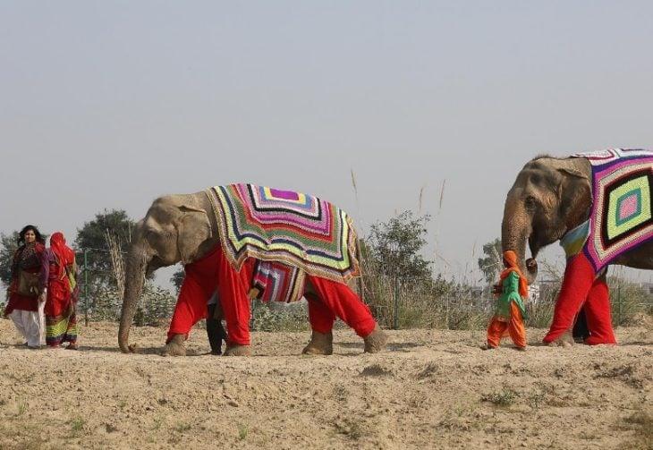 elefantes con pijama