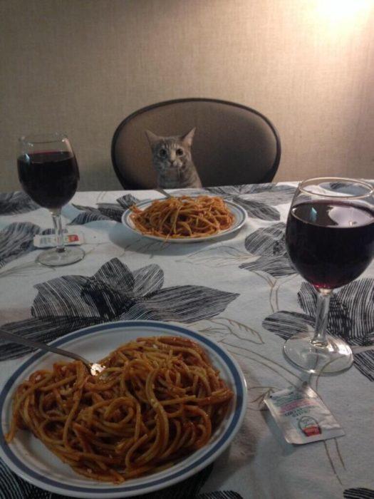 cena con gato