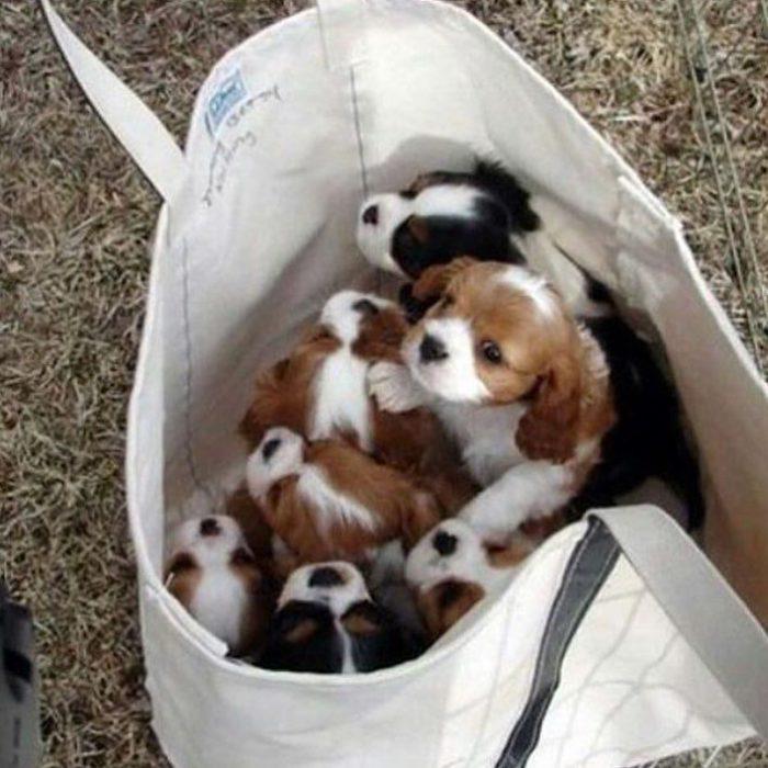 perritos en bolsa