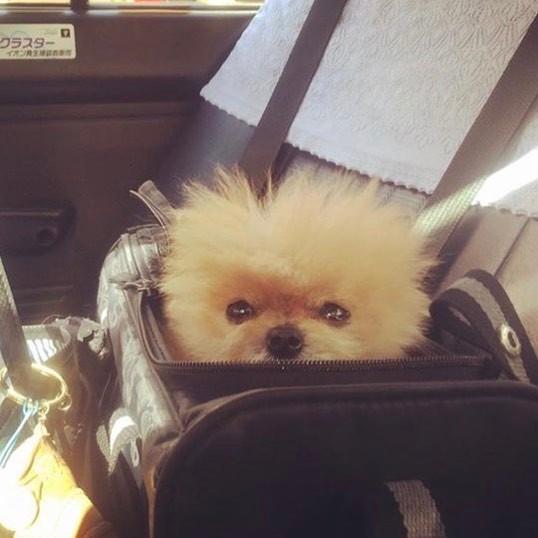 perro en bolsa