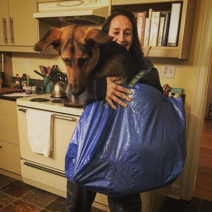perro grande en bolsa