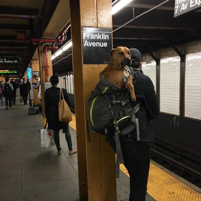 perro en mochila