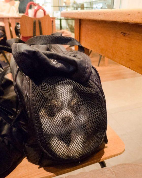 perro en maleta