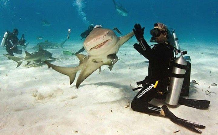tiburon choca los cinco