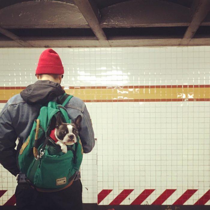 perro mochila