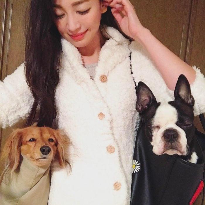 perros en bolsas