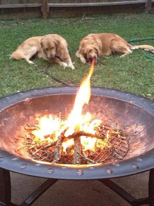 perro lanzallamas