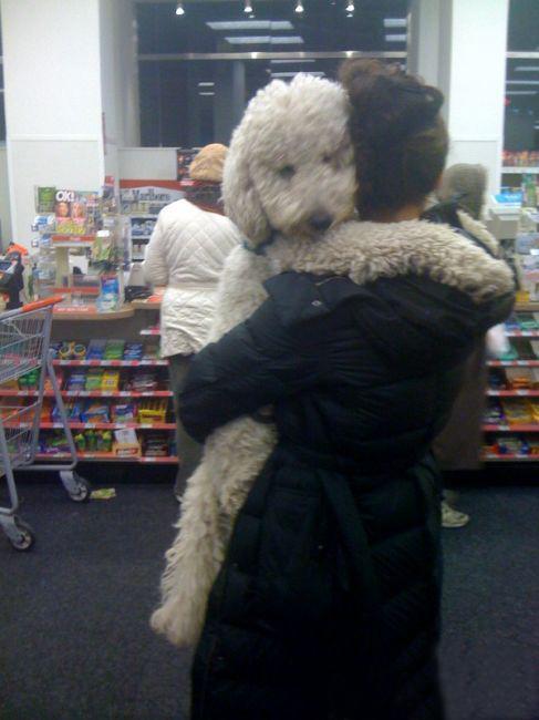 cargando al perro en el super