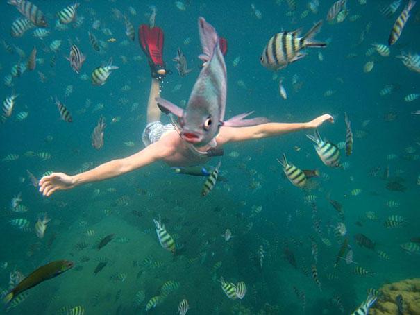 cabeza de pez