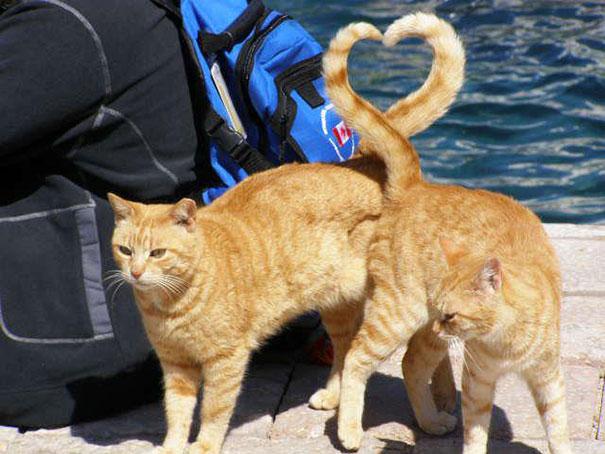 colas de gato corazón