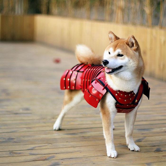Perro usando una armadura samurai