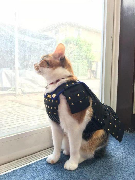 Gato usando una armadura samurai