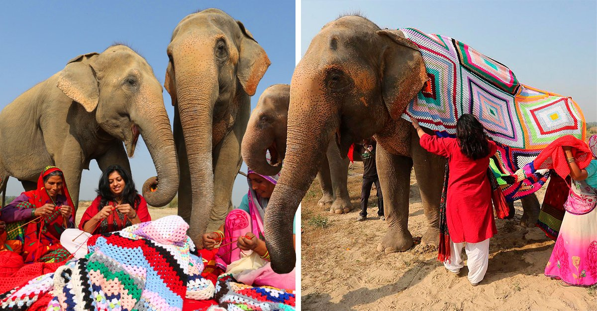 En este pueblo de la India tejen suéteres para proteger a los elefantes del frío