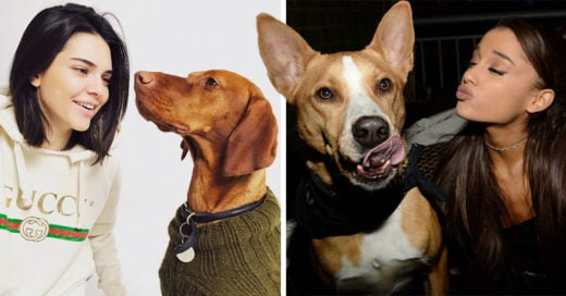 Las mujeres tienen mejor capacidad para entender a los perros: estudio
