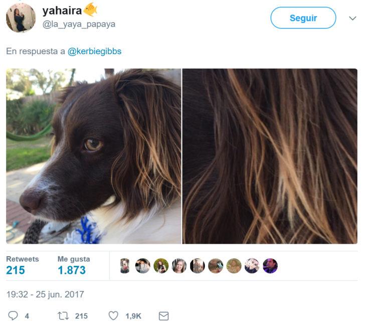 Cabello perfecto de un perrito