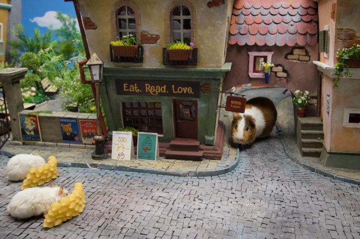 ciudad hamster 10