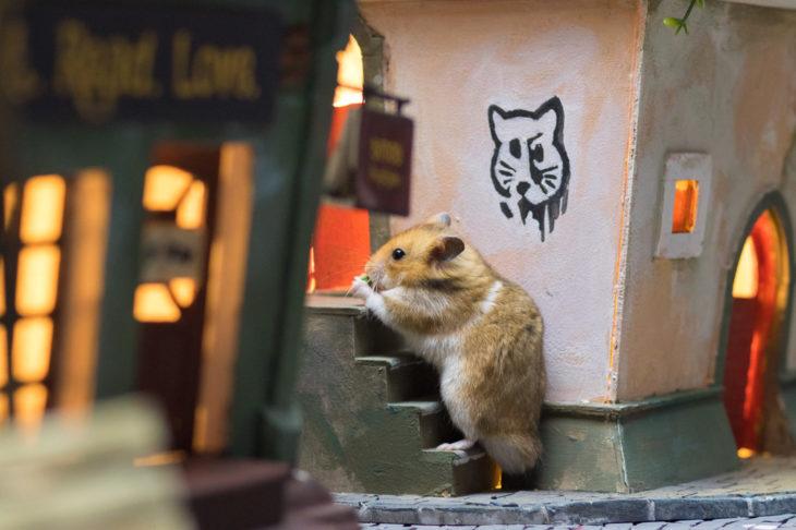 ciudad hamster 14