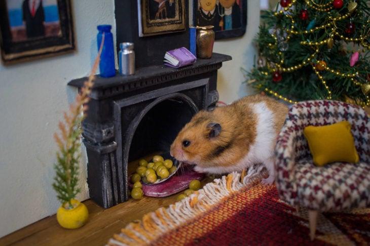 ciudad hamster 17