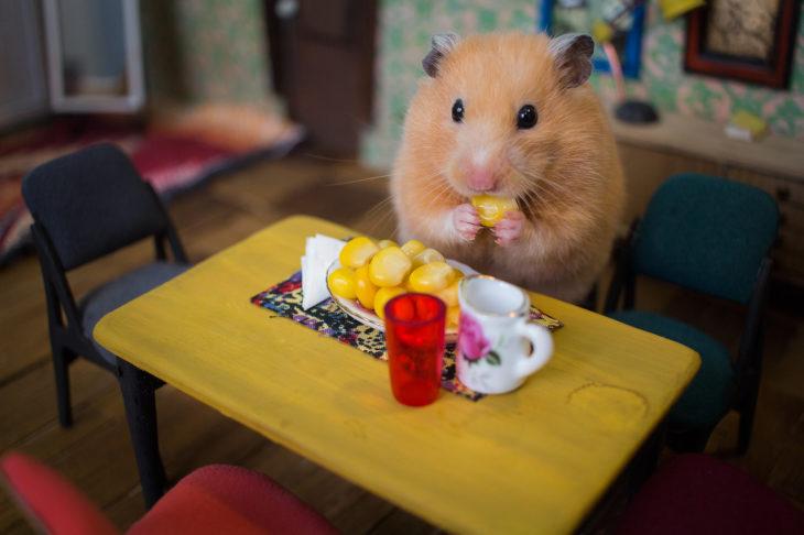 ciudad hamster 2