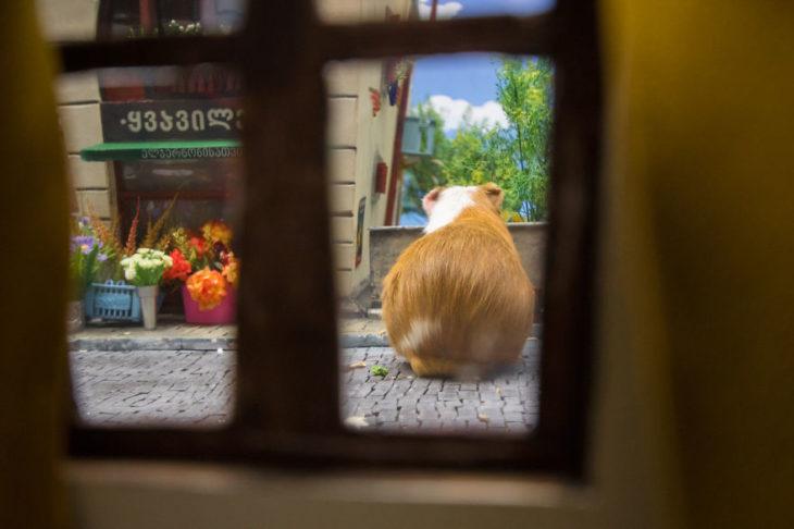 ciudad hamster 21