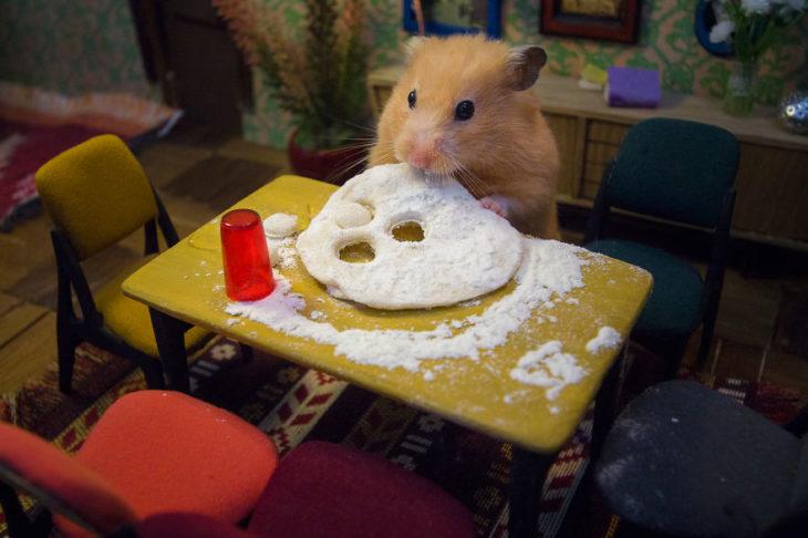 ciudad hamster 23