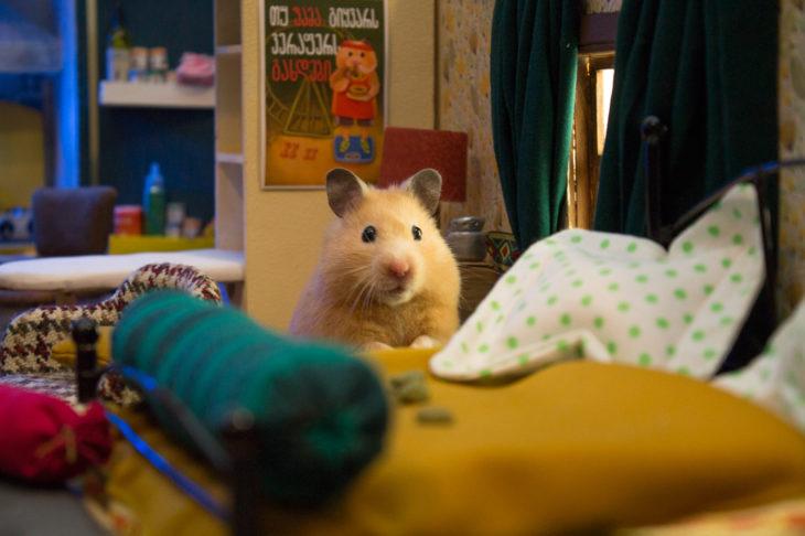 ciudad hamster 6