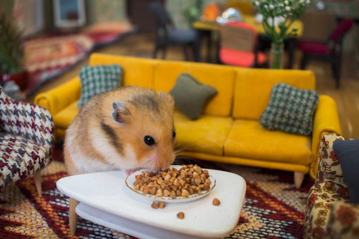 ciudad hamster 7