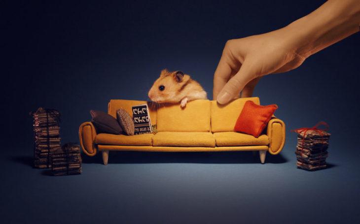 ciudad hamster 20