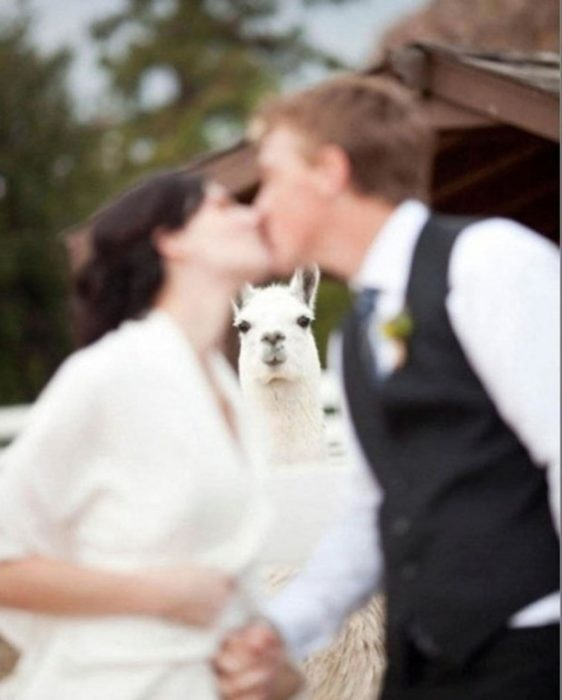 foto boda arruinada 22