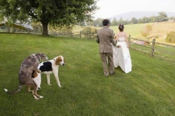 foto boda arruinada 8