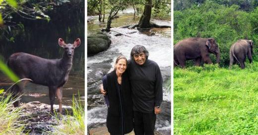 Compraron un bosque en 1991 y pasaron 26 años reforestando; así se ve ahora