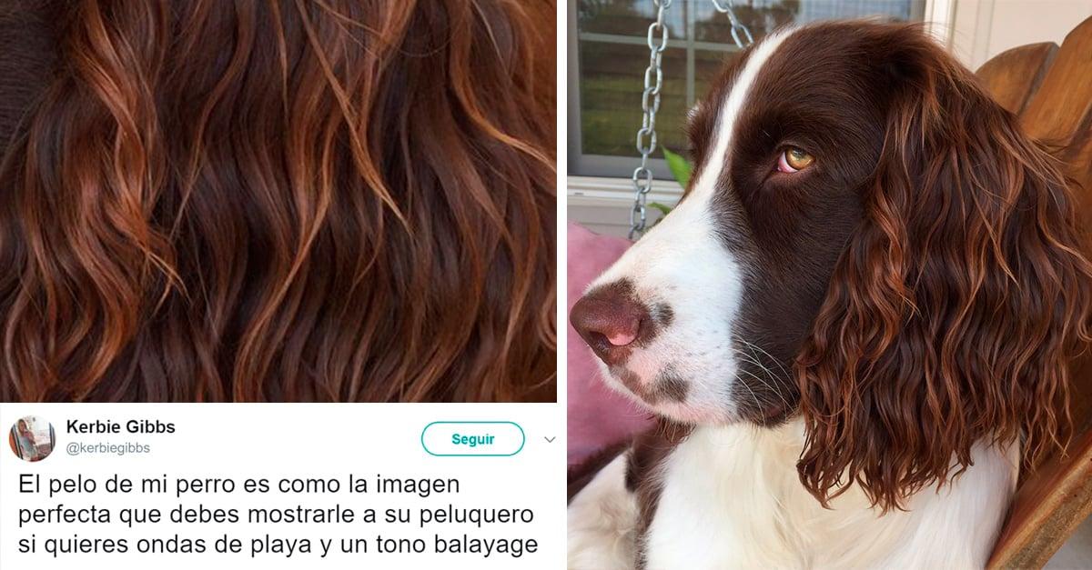 Este perrito te inspirará a teñir tu cabello