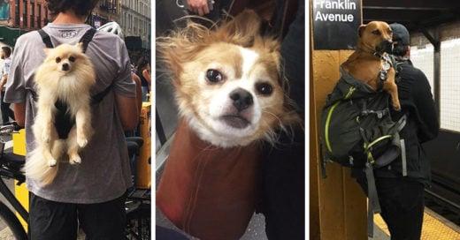 20 Fotos que prueban que los perros están hechos para ser cargados