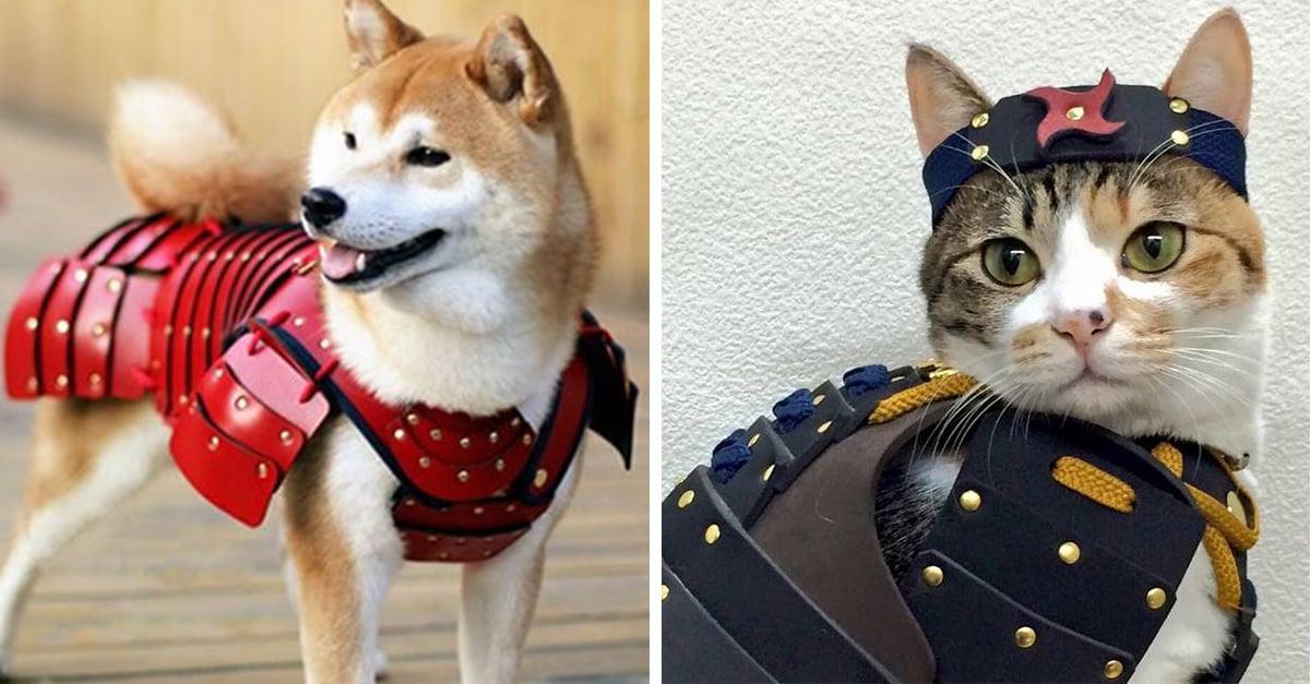 Esta compañía ha creado pequeños trajes samuráis para tus mascotas