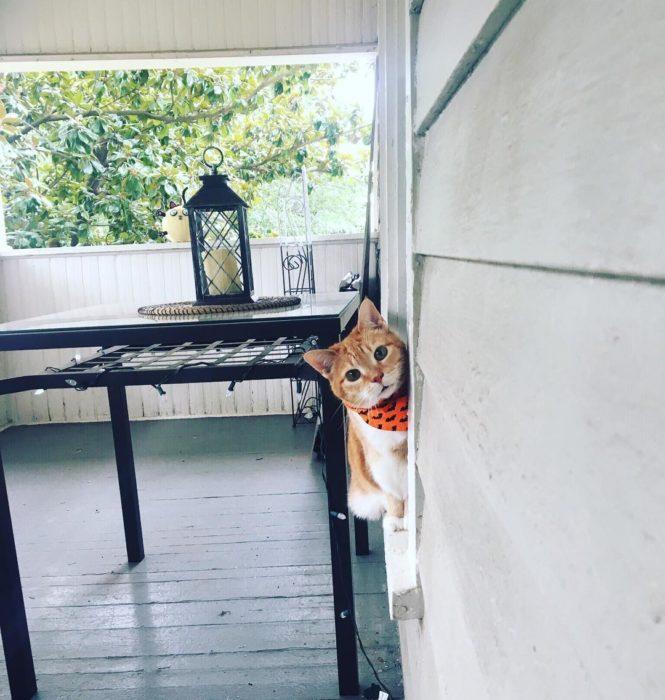 Gato en la ventana