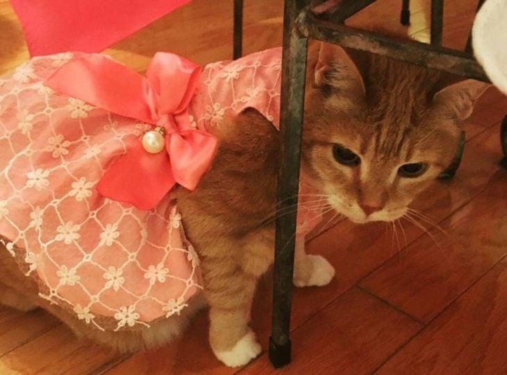 Gato con vestido