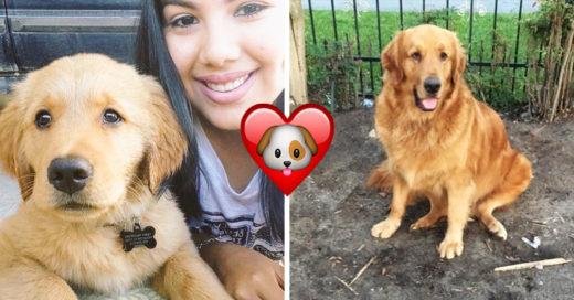 12 Adorables transformaciones de cachorros a perros adultos