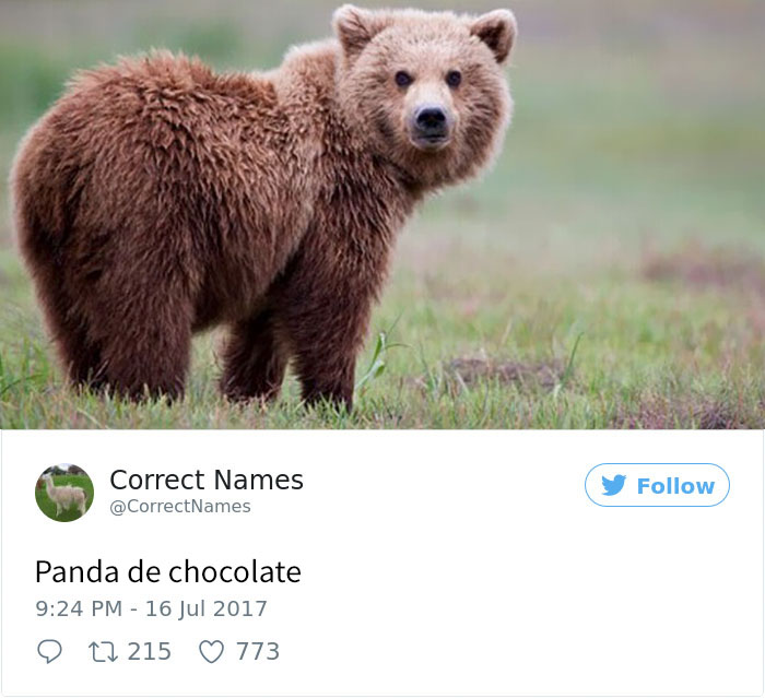 panda de chocolate