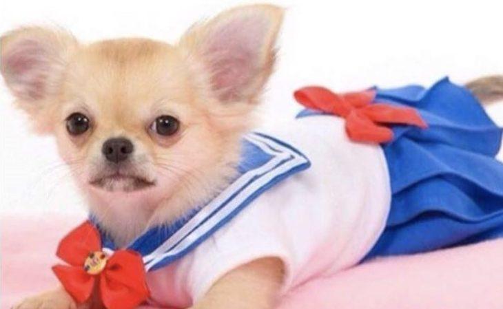 perro con traje de sailor moon enojada
