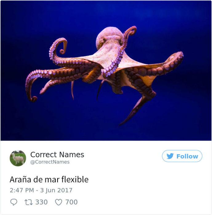 araña de mar flexible