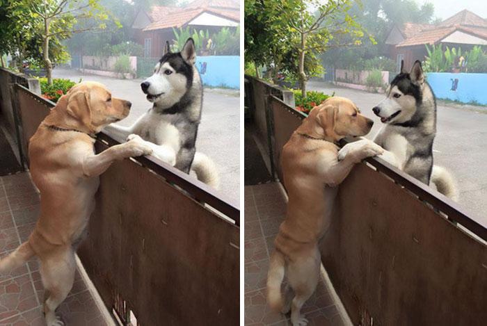 Perro visita a su mejor amigo