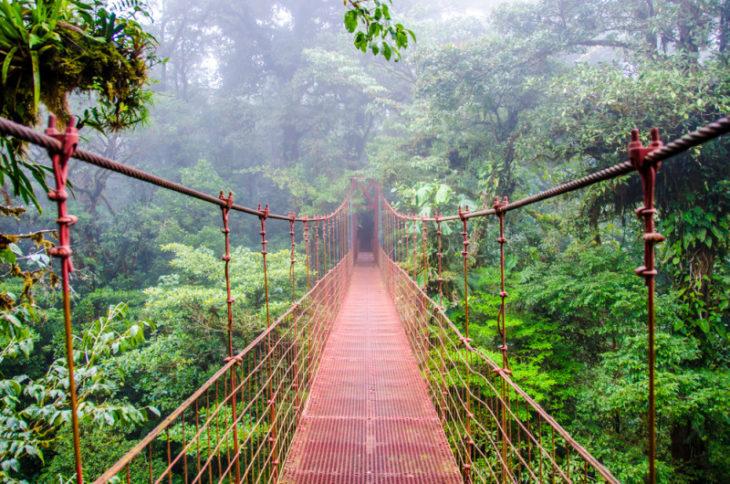 Bosque Nuboso
