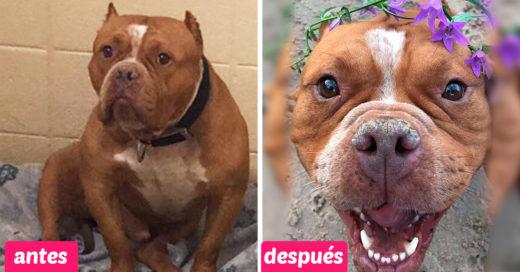 Esta chica le pide a las personas que adopten y muestra cómo cambió la vida de su pitbull
