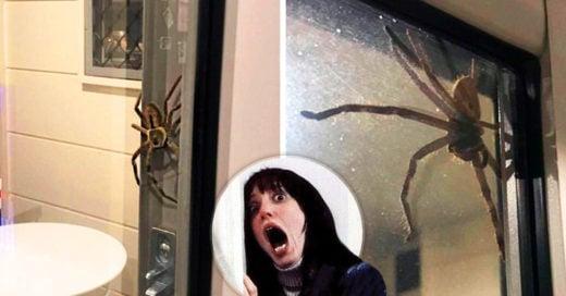 Una araña gigante arruino la cena románticade una pareja Australiana: Internet dice que le prendan fuego